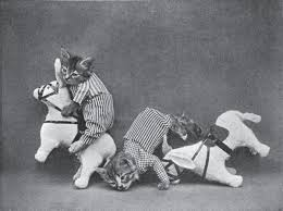 Every time someone votes no for libraries...a kitten falls off his horse.