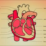 A diagram of my heart by John LeMasney via 365sketches.org #cc #design #heart