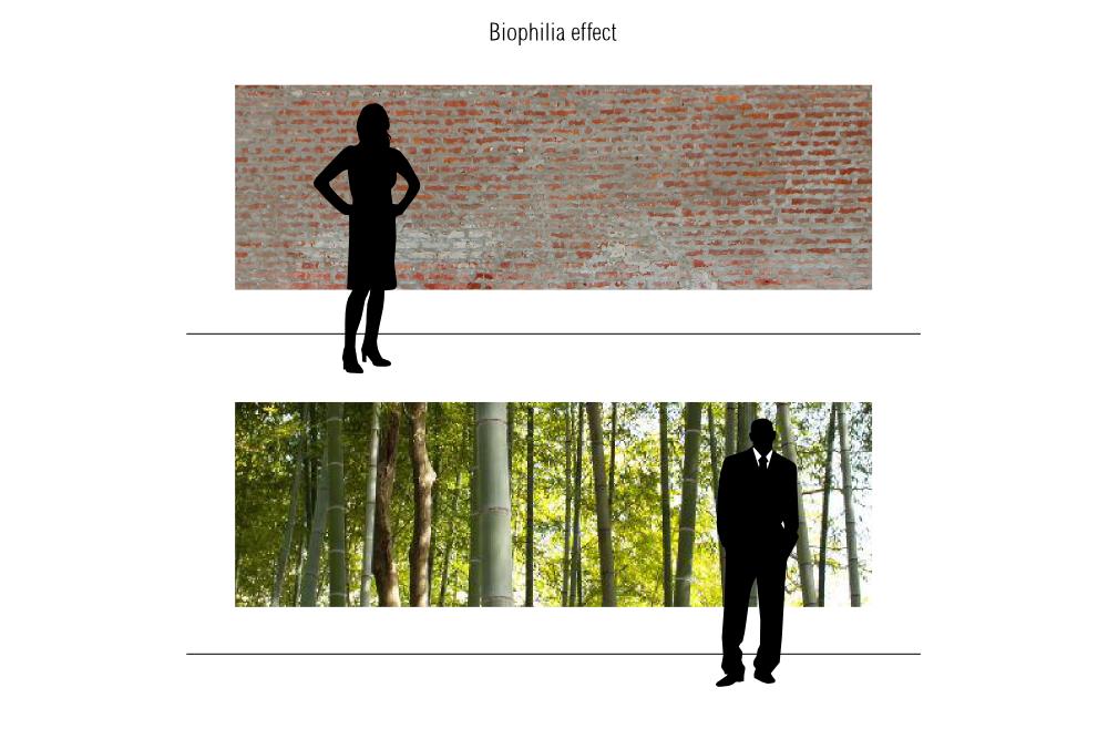 11 Of 365 Biophilia Effect Design Design Principle