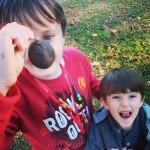 Black walnut hunting in Waynesboro, VA by lemasney